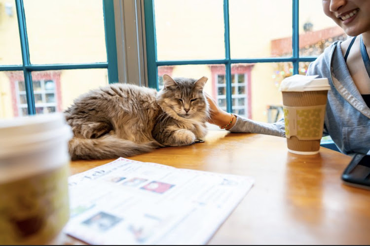 Houston S First Cat Cafe Yureplace